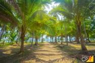 3 pragas do coqueiro: principais medidas de controle