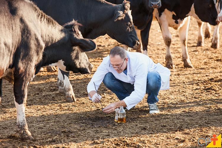 Cuidando do gado leiteiro - imagem ilustrativa