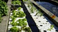 Por que instalar unidades de cultivo autodepuradoras na piscicultura?