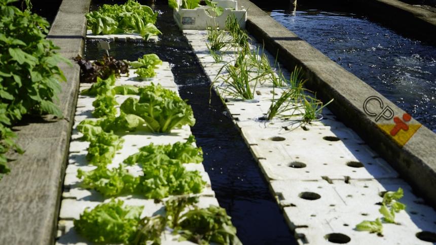 Por que instalar unidades de cultivo autodepuradoras na piscicultura?   Dicas CPT