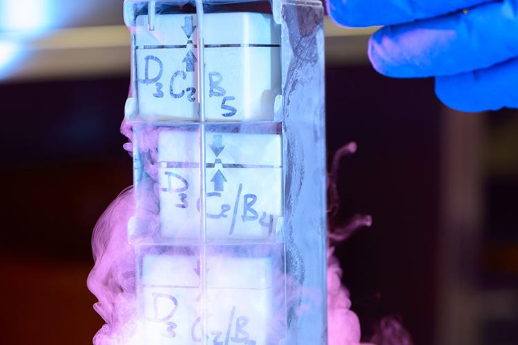 Transferência de embriões em equinos - imagem ilustrativa