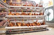Condições ambientais para a criação de frangos de alta densidade