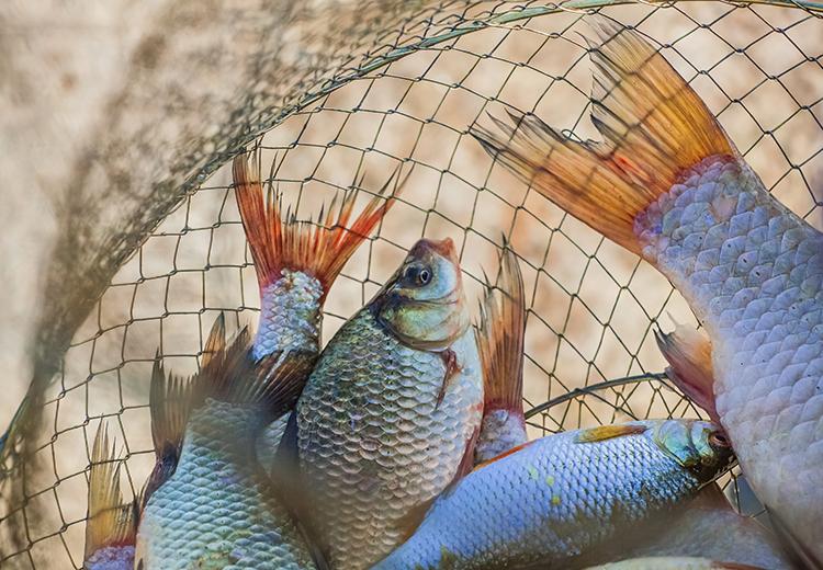 Criação de Peixes - imagem meramente ilustrativa