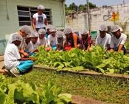 Sustentabilidade progressiva: o que dizem os estudiosos sobre ela?