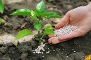 Fertilizantes fosfatados: como aplicá-los