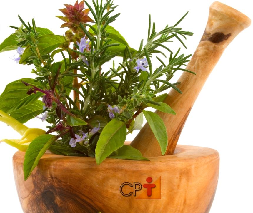 Princípios ativos de plantas medicinais. O que são?   Artigos CPT