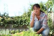 Vai cultivar plantas medicinais em casa? Deposite carinho nessa ação!