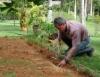 A importância da análise do solo na implantação de jardins