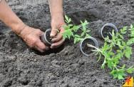 Quais são as formas de plantar ou propagar plantas?