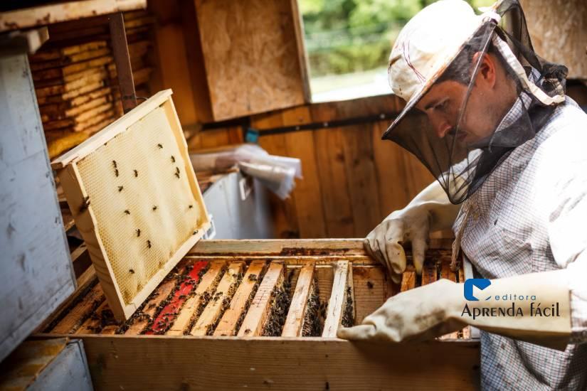 Boas práticas na colheita do mel para maior qualidade