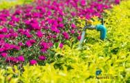 Sugestões de irrigação para diversos jardins