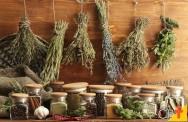 Cultivo de plantas medicinais: o processo de secagem
