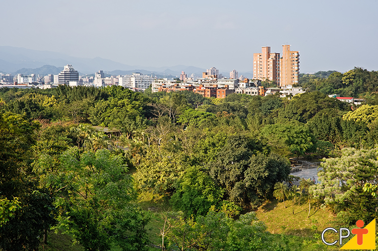 Arborização urbana - imagem ilustrativa