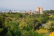 Espécies nativas para a arborização urbana