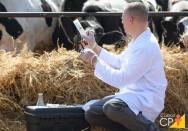 Tire suas dúvidas sobre mastite em gado de leite