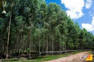 Quais os tipos de tratamento na madeira de eucalipto?