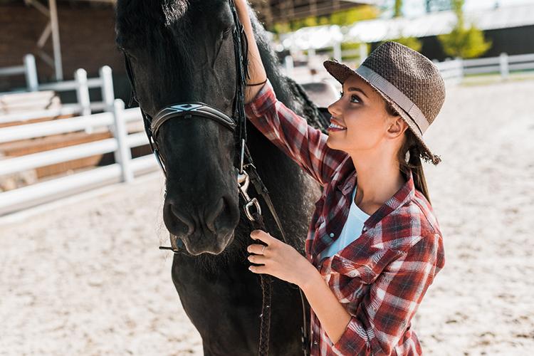 Cavalo com arreamento - imagem ilustrativa