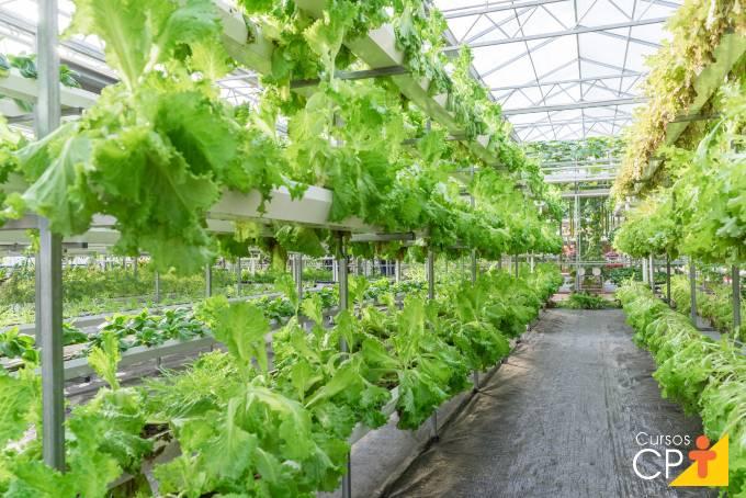 Dicas de cultivo de alface orgânica hidropônica