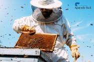 Perguntas e respostas sobre troca da abelha rainha
