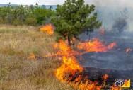 Como prevenir incêndios florestais durante a seca