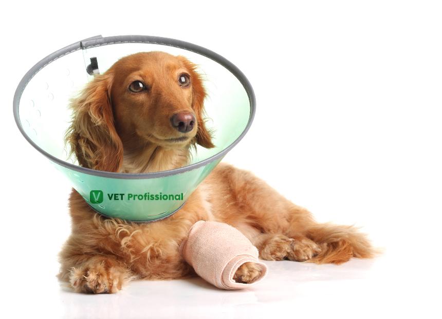Sr. Veterinário, entenda mais sobre pets com problemas neurológicos   Artigos VetProfissional