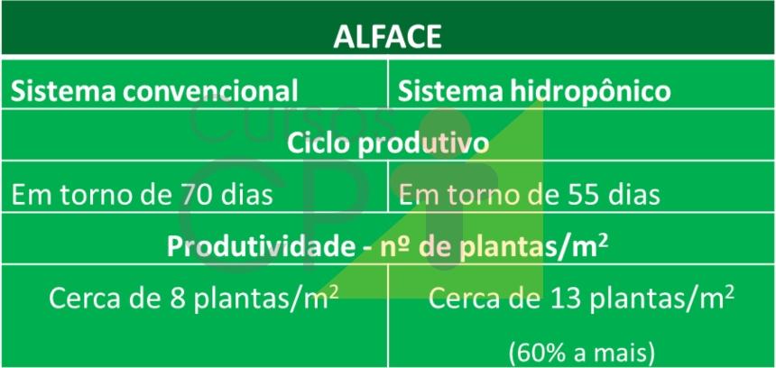 Sistemas de cultivo hidropônico e convencional: qual o mais vantajoso?   Artigos CPT