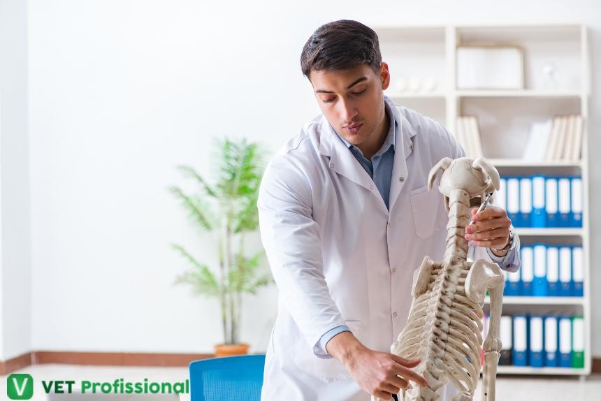 Medula espinhal: ponto-chave na fisioterapia veterinária   Artigos VetProfissional