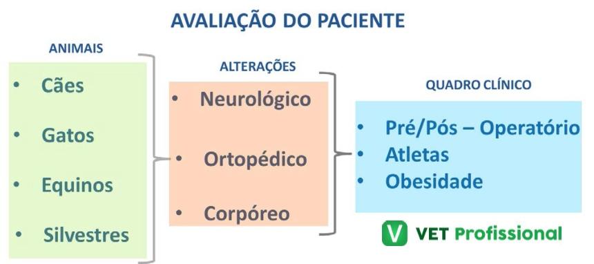 Resumo acerca das alterações observadas no quadro clínico   VetProfissional
