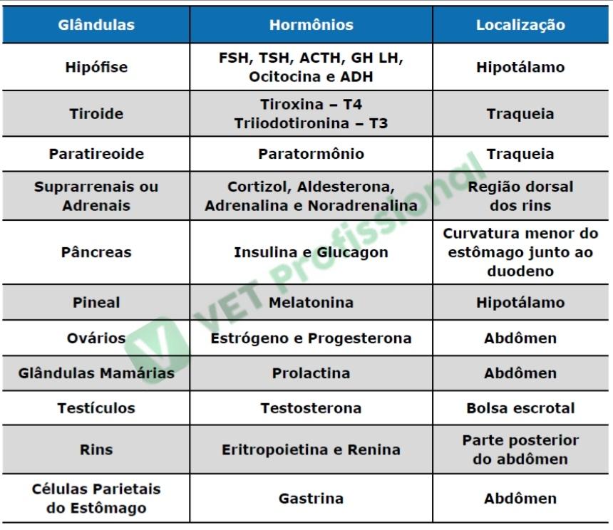 Principais glândulas endócrinas e suas respectivas secreções hormonais   VetProfissional