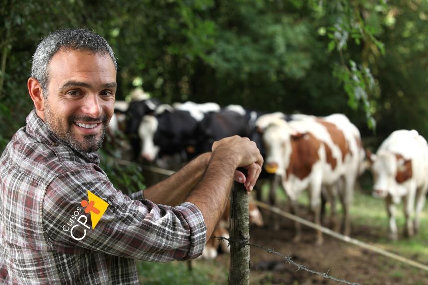 9 dicas para prevenir os problemas de casco em bovinos   Dicas CPT
