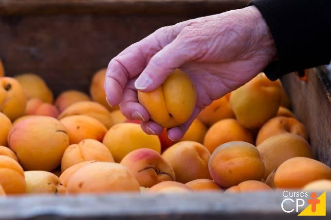 Perguntas e respostas sobre plantio de damasco