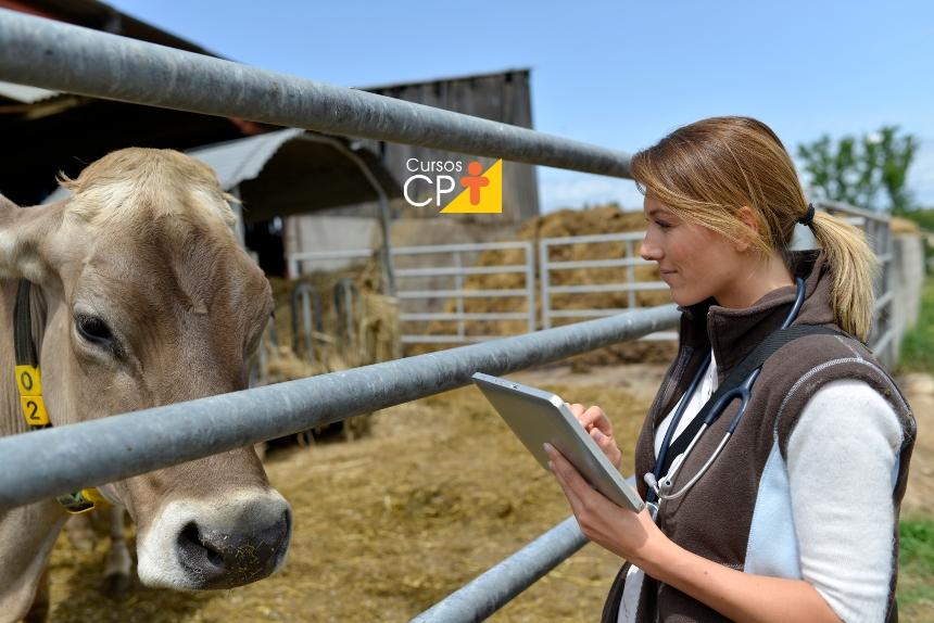 Gestão zootécnica na pecuária de leite: a categorização do rebanho   Artigos CPT
