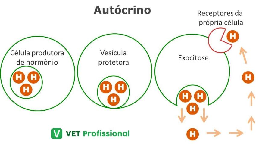 Atuação hormonal: autócrino     VetProfissional