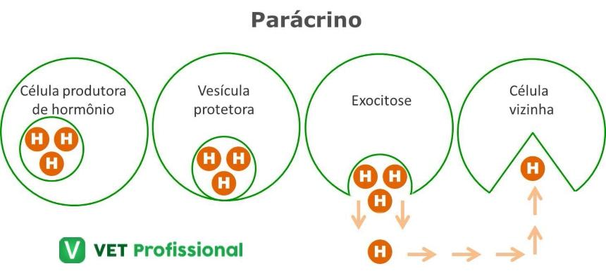 Atuação hormonal em nível celular: parácrino    VetProfissional