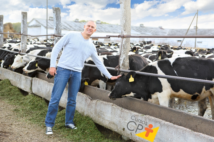 Gestão zootécnica na pecuária leiteira: divisão de lotes     Artigos CPT