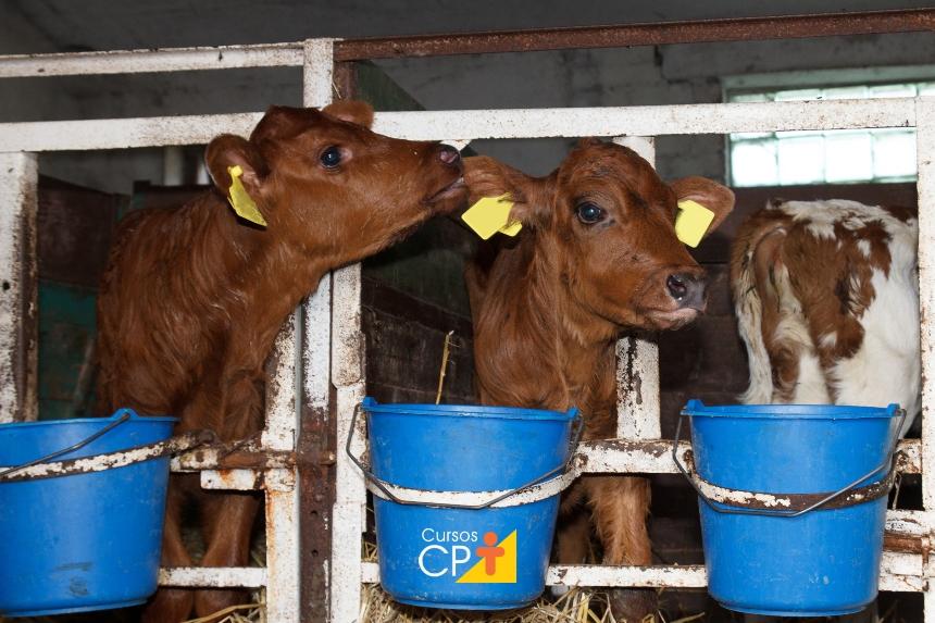 Gestão zootécnica na pecuária leiteira: indicadores reprodutivos   CPT
