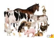Reprodução animal: de quanto tempo cada animal precisa?