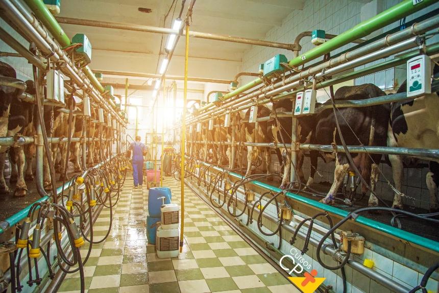 Gestão zootécnica na pecuária leiteira: boas práticas agropecuárias de acordo com a IN 77   CPT