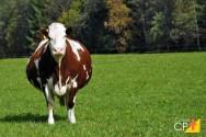 5 tecnologias reprodutivas para a pecuária leiteira nos próximos anos