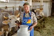 A importância dos cruzamentos na pecuária leiteira