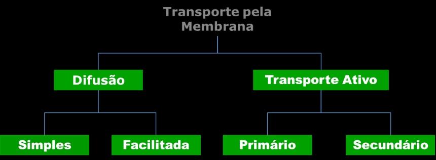 Transporte pela mambrana   Artigos VetProfissional