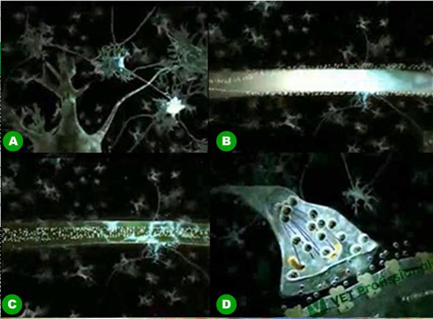 Bioeletrogênese em células do sistema nervoso    Artigos VetProfissional