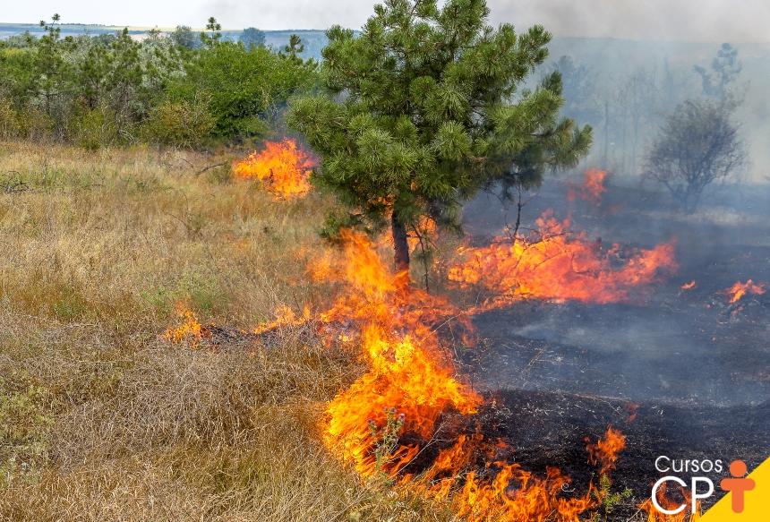 Impactos ambientais: o que são e suas consequências ao meio ambiente   Artigos CPT