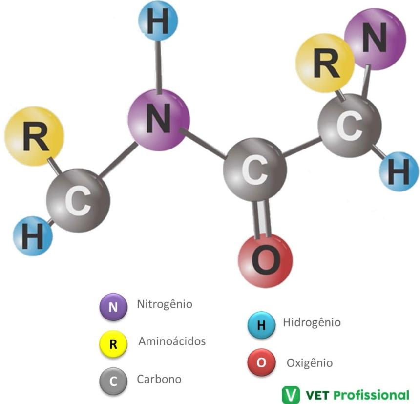 Estrutura Primária das Proteínas    Artigos VetProfissional