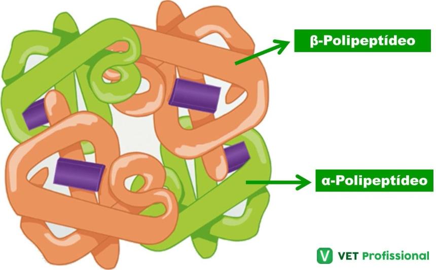 Estrutura Quaternária das Proteínas    Artigos VetProfissional