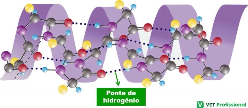 Estrutura Secundária das Proteínas   Artigos VetProfissional