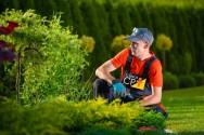 O mercado de trabalho precisa de jardineiros. Capacite-se!