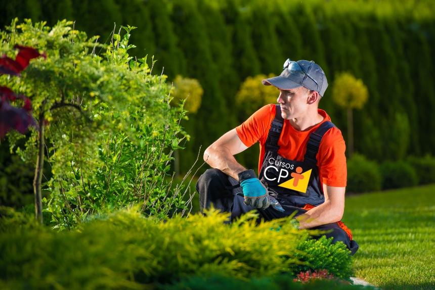 O mercado de trabalho precisa de jardineiros. Capacite-se!   Dicas CPT