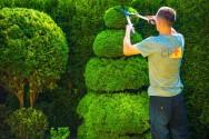 Dica de capacitação com espaço garantido no mercado? Jardinagem!