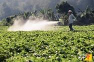 Como aplicar corretamente os fungicidas